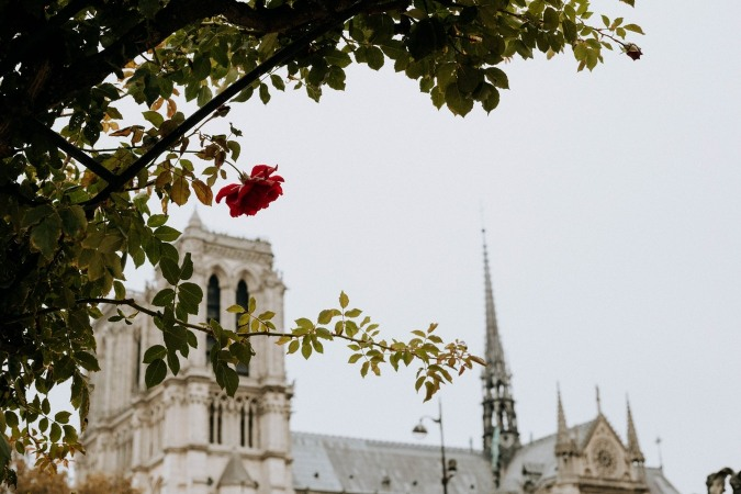 Notre-Dame Cathedral, a living witness to 850 years of history